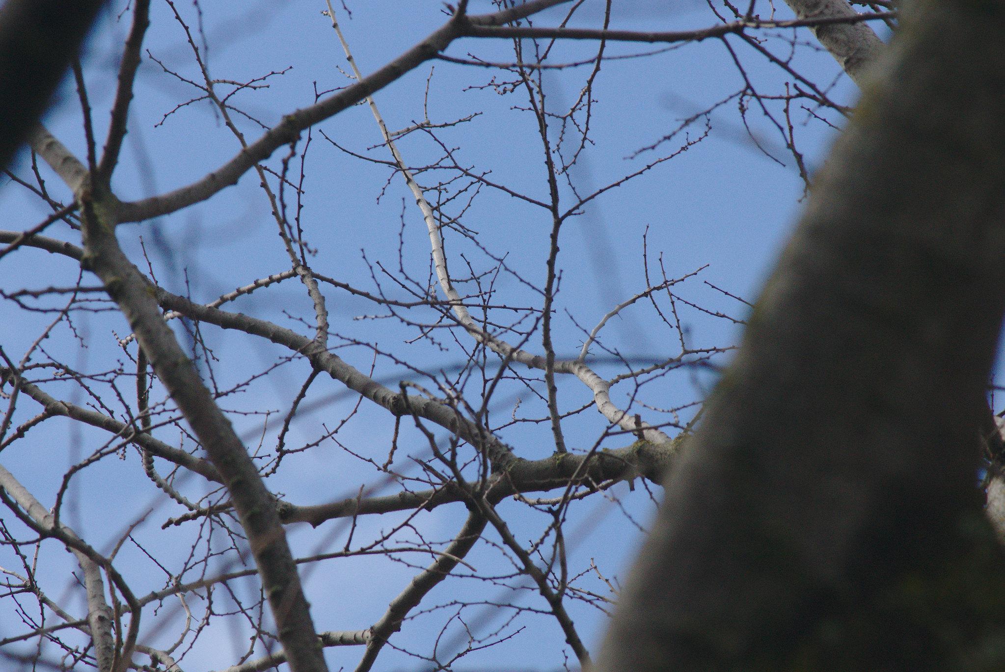 2017-02-18 Twigs Test - Take 8 [#5]