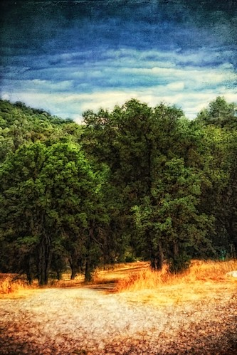trees painterly grass northerncalifornia clouds golden woods artistic path creative dramaticsky textured mariposacounty likeapainting canon450d