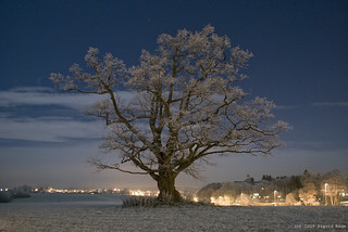 Moonlit Frosty Winter Oak | by Sigurd R