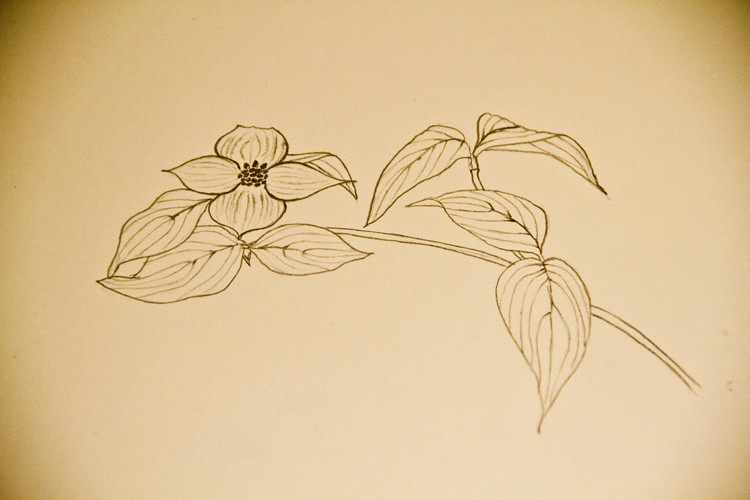 Dogwood Sketch 1
