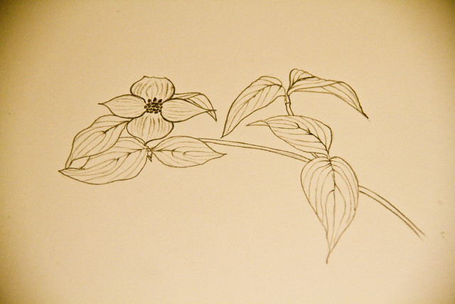 Dogwood Sketch 1