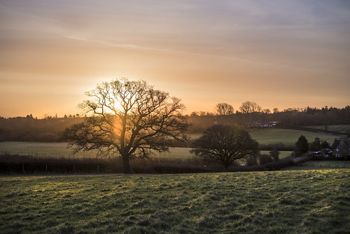 viewpoint but that one tree silhouette haze sunrise oxfordshire countryside nature golden grass fields rise cold wet muddy nikon project 365 d750