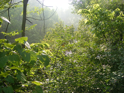 mist sunrise bigrock beargrasscreek historicolmstedvista