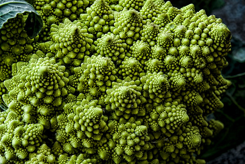 Romanesco broccoli_0182 | by i.R.P.i
