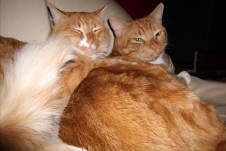 20091213 - kitties - GEDC1151 - cat-ass-trophe