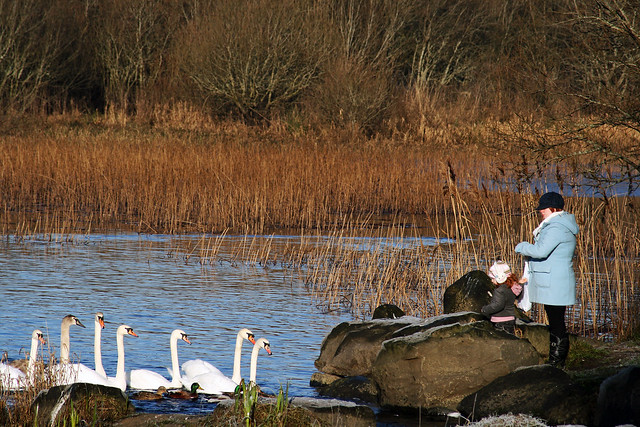 Feeding the swans at Lough Lannagh on New Years Day 2010