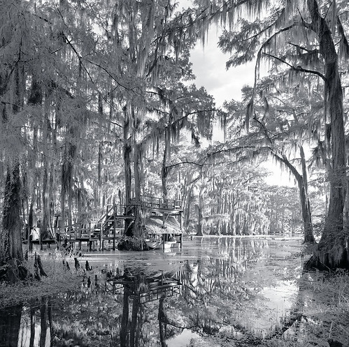 wood autumn blackandwhite bw usa lake plant reflection tree fall nature wet water forest swim sunrise dark landscape carpet dawn la harbor boat leaf stem flora texas underwater unitedstates flood harbour outdoor tx south scenic calm landing southern bayou cover covered swamp lousiana spanishmoss mysterious mystical 20 shelter float caddo mystic drown rhythm uncertain afloat deluge firstlight tejas deepsouth submerge spinney coppice underwoods top20texas bestoftexas