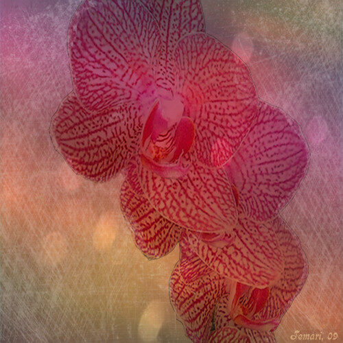 Laughing Orchid