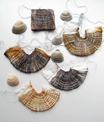shells | by tinctory