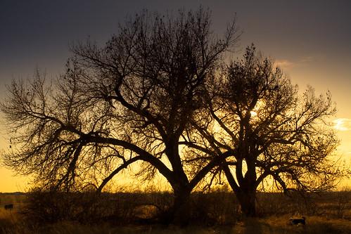 sunset colorado denver dogpark canonef2470mmf28lusm cherrycreek lightroom preset warmsunsetgold theresanouzotheresomewhere