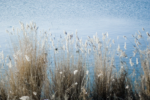 reed water 010110 poppreset