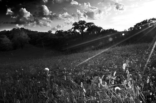 trees light sunset bw sun grass ky lensflare bigbonelickstatepark nikond90