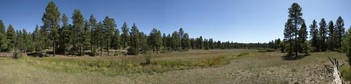 arizona pinetoplakeside pinetop pinetoparizona whitemountains bigspringsenvironmentalstudyarea bigsprings springs wetlands meadows ponderosapines landscape panorama riparian riparianzone riparianarea riparianhabitat