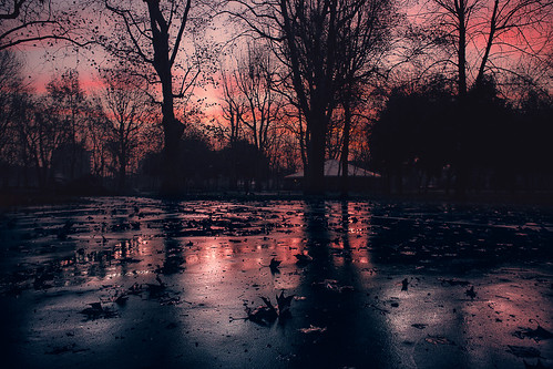 enricodot bologna montagnola sunrise red morning leaves rain