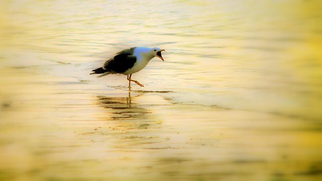 Seagull écharpe-rouge