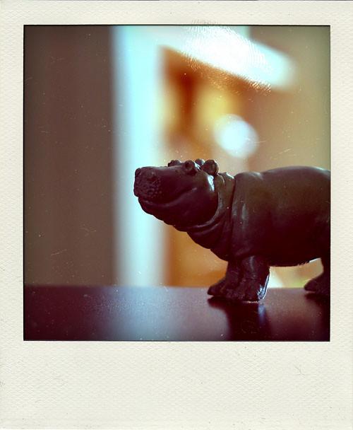 hippo polaroid