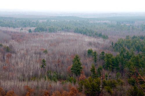 WI Fall Forest 1 by nataraj_hauser / eyeDance