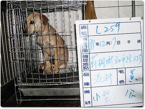 20091224『只缺一個機會!』雲林防治所公告.12月24日至12月30日止,英國鬥牛犬、哈士奇、米克斯幼犬xN、米克斯