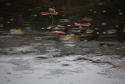 Raindrops in pond with waterlily | by Fokko Muller