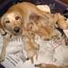 Breeders Digest, October 2009