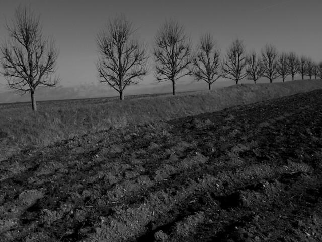 Plough keeper trees.