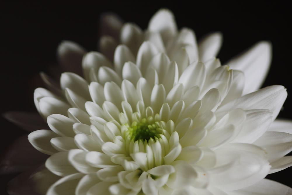 Cencibel Smart Casual Tirantes Flores Margaritas Blancas