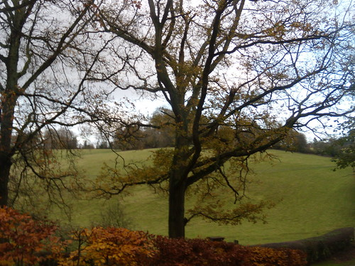 Tree with beech hedge and hill Knockholt Circular