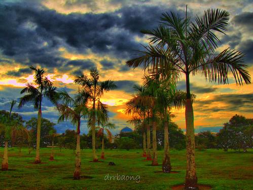 sunset sky cloud tree library palm sarawak malaysia kuching senja pustaka