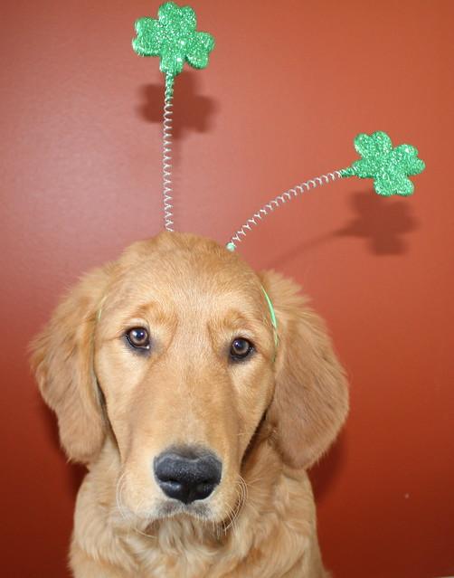 Happy St. Patrick's Day from Daisy Mae