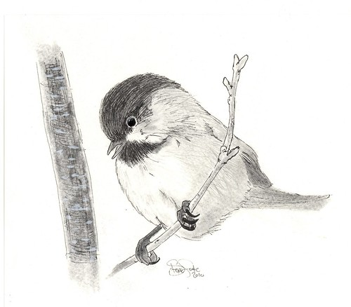 chickAdee   pen and ink drawing chickadees are one of my ... - photo#39