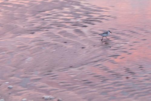 beach gulfofmexico sunrise reflections sand waves florida shore englewood mislevy