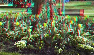 Tulip 3D   by www.guyk.fr