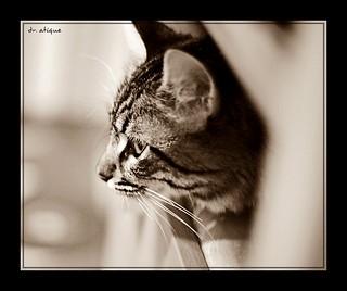 kak Mas's cat