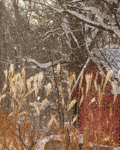 winter red snow grass barn canon michigan powershot backlit showers berriensprings hinchman s5is