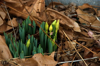 Spring is coming! | by Veronique Christensen