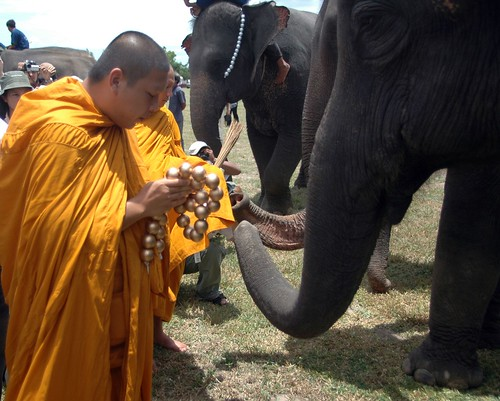 A monk blesses the elephants | by Anantara Journeys