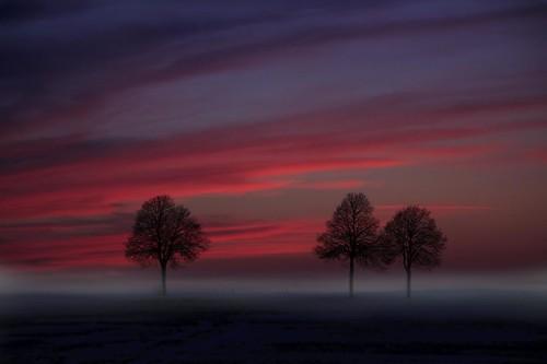 trees winter sunset sky clouds landscape deutschland sonnenuntergang sundown himmel wolken landschaft bäume abendrot niedersachsen dransfeld infinestyle