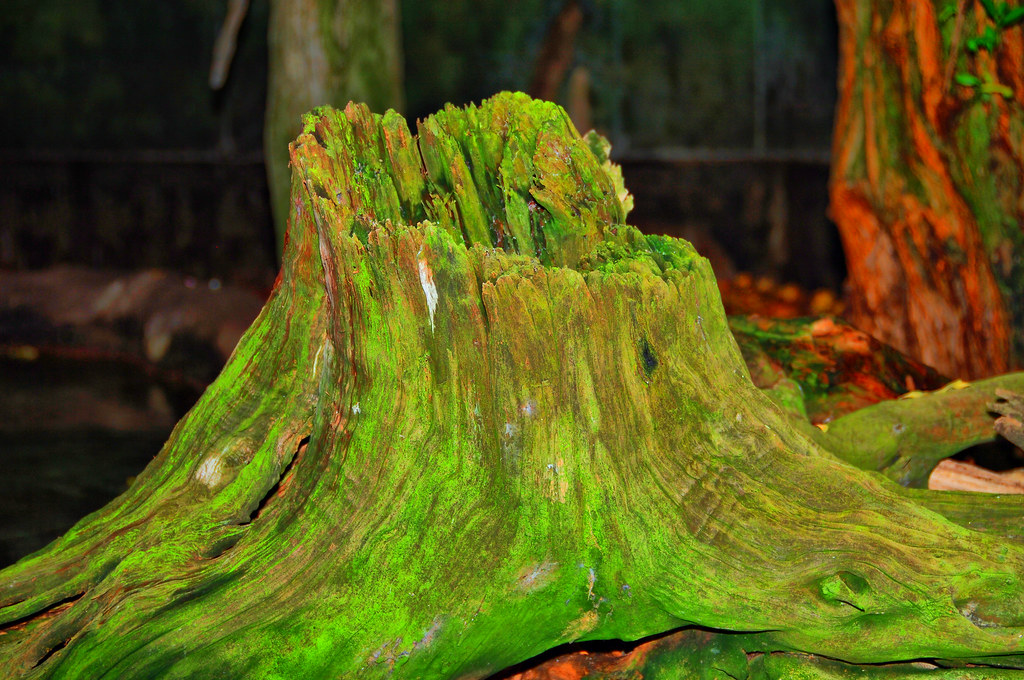 Mossy Green Tree Stump