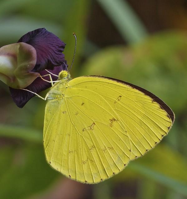 IMG_9698 grass yellow
