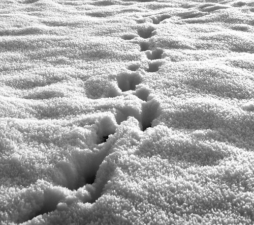 Footprints in the Snow | by ManicXMiner