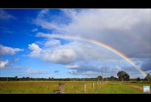 bird clouds canon fence landscape rainbow birding australia brisbane queensland canonef1740mmf4lusm oxleycreekcommon 5dmkii