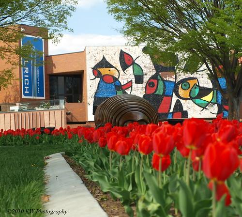 WSU Tulips
