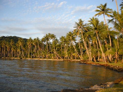 ocean trees island paradise pacific palm tropical weno chuuk federatedstatesofmicronesia truklagoon