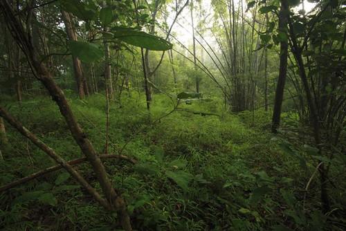 Wed, 11/21/2007 - 22:37 - Mixed deciduous forest, Huai Kha Khaeng. Credit: Christian Ziegler