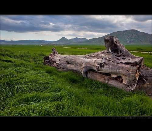 mountains nature grass landscape countryside spring log farm hills valley stump morenovalley tomgrubbe tomgrubbecom
