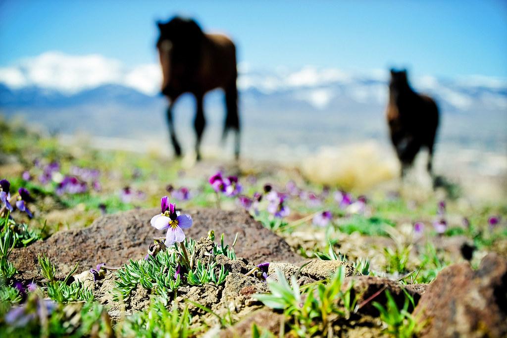 Wild Horse Spring by {photonista} Rachel Hamrick