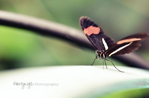 usa flower macro closeup butterfly garden nikon colorful dof bokeh maryland silverspring insert brooksidegarden nikkor105mmf28gvrmicro d7000