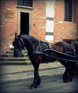La Cavallo Negro