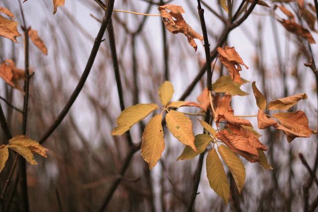Buckeye, fall