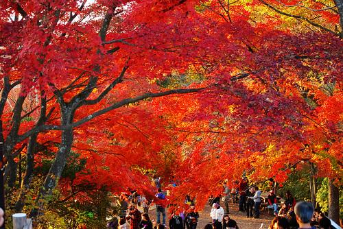 秋の高尾山 紅葉